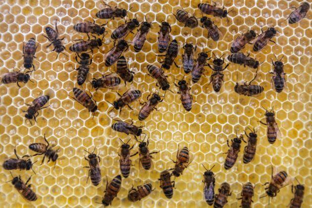 Kontraktsodling av bin är en smal, men växande nisch i Sverige. I nuläget finns det 25–30 företag, bland annat biodlare, som marknadsför sig som andelsföretag.