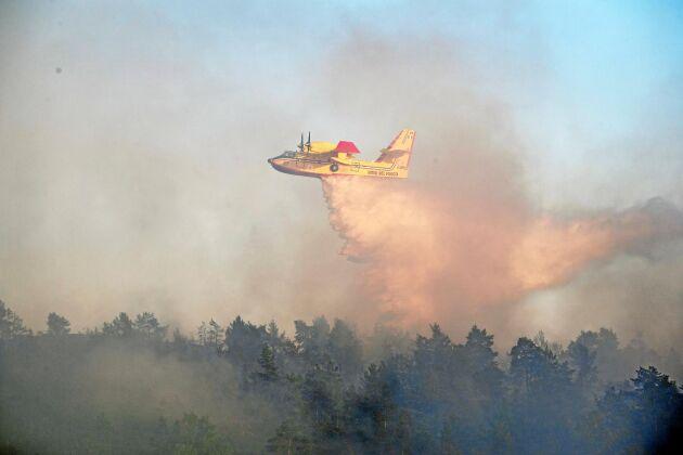 Brandflyg och söndertorkade sädesfält. Är det så vi kommer att minnas sommaren 2018?