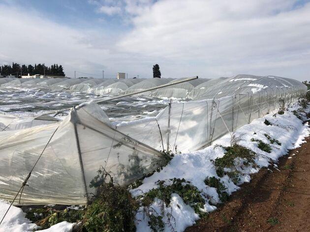 Jordbruksorganisationerna talar om skador för minst sju miljarder efter snöovädret i Italien.