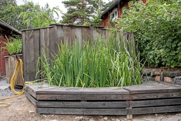 Steg 2. Det enda som syns av reningsanläggningen är dammen med växter som tar upp överskottsnäringen. Här växer smalbladigt kaveldun, svärdslilja, säv och vass.