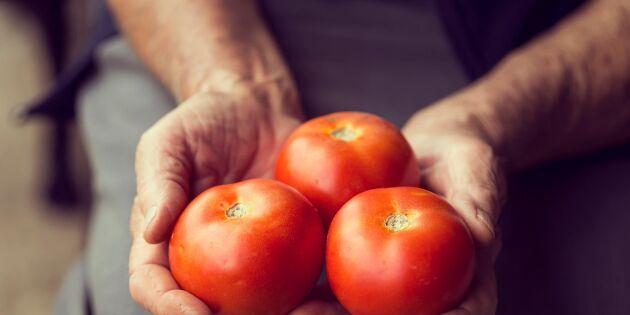 Frys in dina tomater – allt du behöver veta!