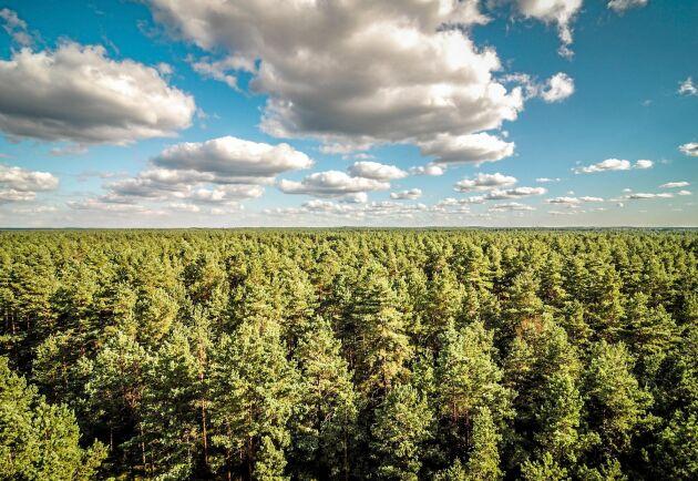 """Maria Högvall Nordin och Raymond Wide har tagit fram rapporten """"Åtgärder för en jämställd skogssektor"""" för Skogsstyrelsen."""