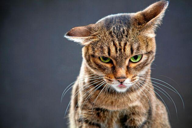 Känner du inte riktigt igen din katt? Den kan vara deprimerad.
