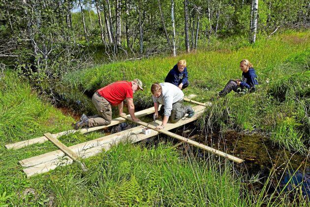 Många ungdomar får sommarjobb i skogen.