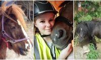 Jägaren sköt två ponnyer – får böter