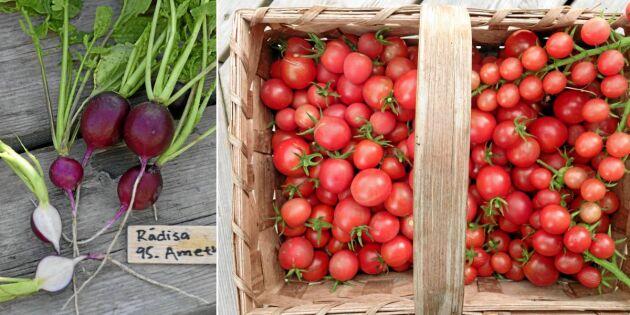 Nya fröer: Odla grönsaker du inte sett förut – 11 goda nykomlingar