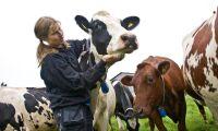 """Mjölkbonden: """"Frustrerande att vara utan ström"""""""
