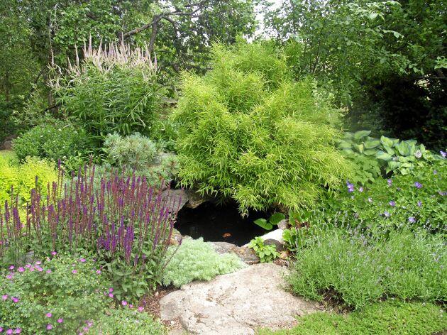 En av flera dammar i en vattenrik trädgård.