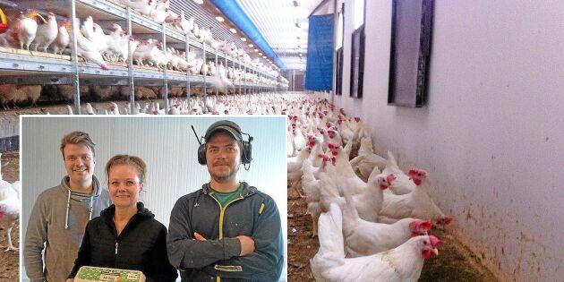 Påsken peak för nordlig äggproducent