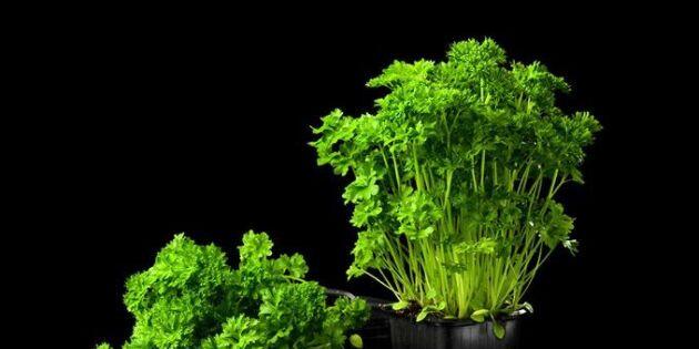 Chili, lök och grönt – 5 sätt att tjuvstarta vårodlingen på