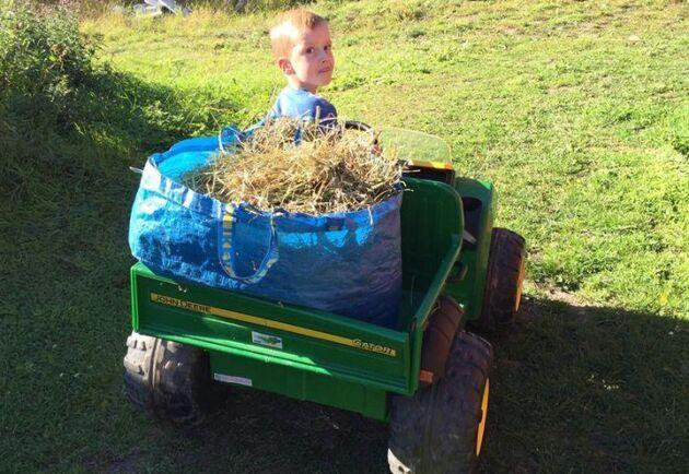5-åriga Sid hjälper till att fodra djuren.