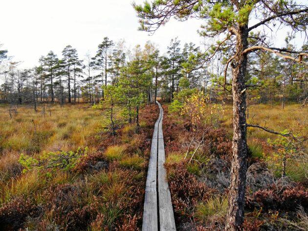 Store mosse nationalpark i Småland.