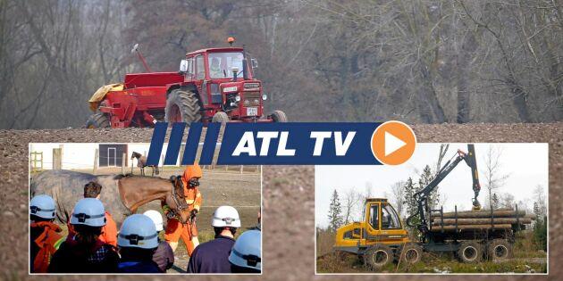ATL TV: Tidig sådd av maltkorn