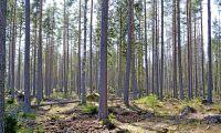 Rekordpriser på skog igen