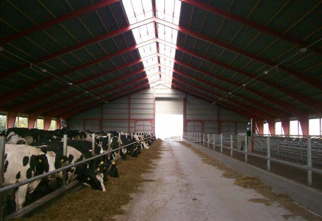 Vi mjölkbönder investerar i bra djurvälfärd 365 dagar om året, skriver Per Andersson.