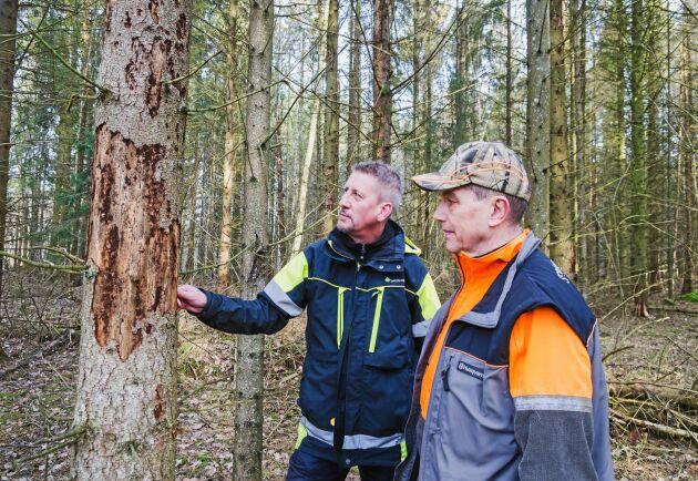 Ove Arnesson (till vänster), Skogsstyrelsen och Sören Strand, skoglig förvaltare.