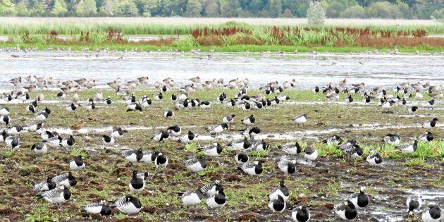 10 heta ställen att skåda flyttfåglar på hösten