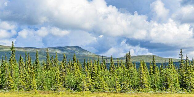 """Domen om fjällnära skog: """"Rättsläget klart som fjällbäckens vatten"""""""