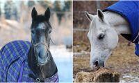 Forskare: Hästen håller sig varm själv