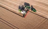 Fina grödor trots torkan