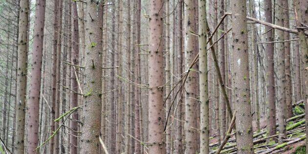 Ta tag i skogsskötseln – med tre T