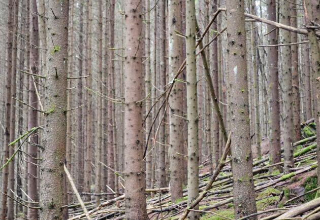 Här finns det mer att göra - Skogstyrelsen har tagit fram ett recept för bättre skogsskötsel - med tre T:n att komma ihåg.