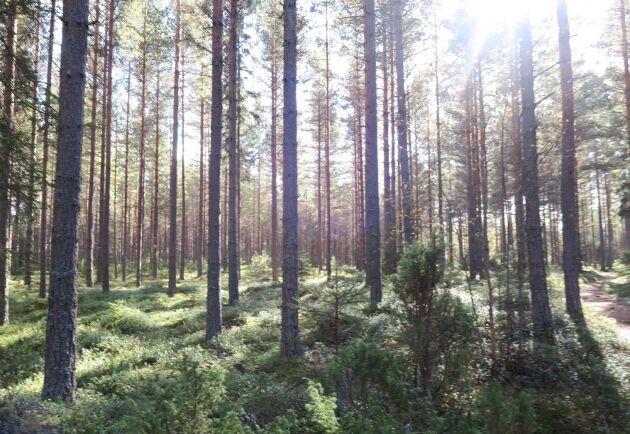 United Bankers skogsfastighetsköp är ett av de största i Finland de senaste tio åren.