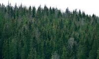 Certifierad skog i Sverige – län för län
