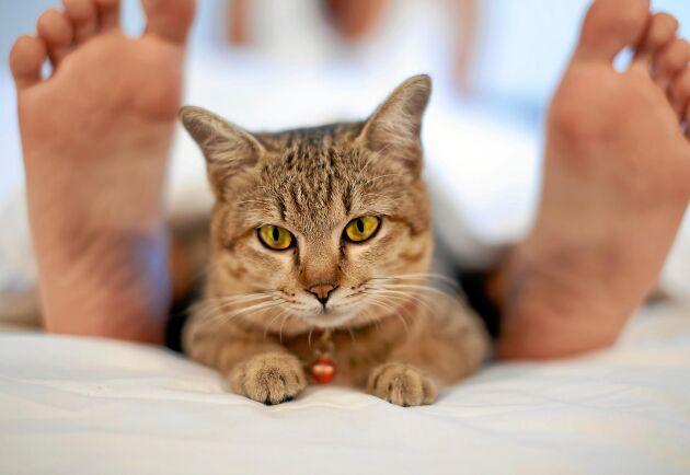 Fötter betyder mer för katten än du tror.