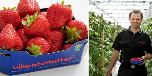 Mums! Här finns det svenska, färska jordgubbar även i höst