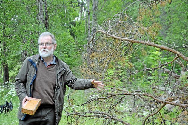 Gunnar Isacsson är ekolog på Skogsstyrelsen. Han kommer nu besöka några platser i Blekinge och Småland som han håller extra koll på för att se om det finns angrepp av en ny generation granbarkborrar.