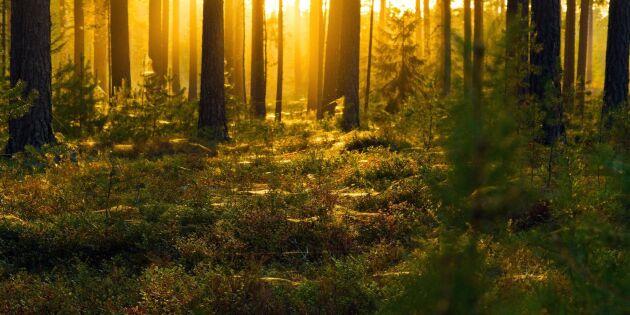 Priserna på skogsmark på rekordnivå