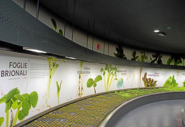 I temagrottan om framtiden kan man plantera frön och följa hur de växer.