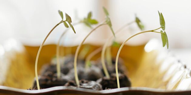 Växtbelysning: Så fungerar det och så väljer du rätt