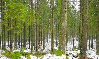 Ny avknoppning från Bergvik