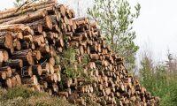 Skogsbruket ska inte skötas av domstolarna