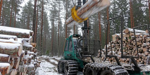 Massapriset driver på i skogen