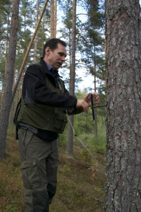 För nio år sedan gödslade Fredrik Stål ett 85-årigt tallbestånd med ståndortsindex 24 som gallrats två år tidigare. Nu ser det ut som han fått den tillväxtökning på 15 kubikmeter per hektar som han hoppades på.