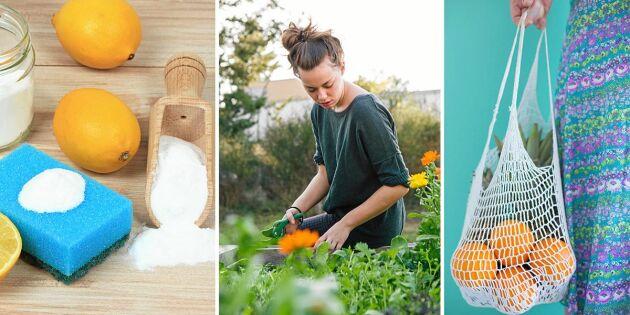 Så kan du leva ett mer hållbart liv –10 handfasta tips