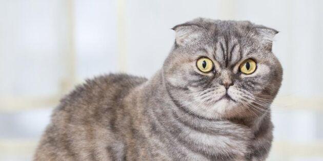 Överraskande fakta: Katten spinner inte bara för att den är nöjd