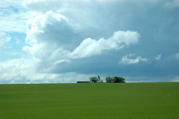 Allt fler danska bönder vill ställa om till ekologisk odling.