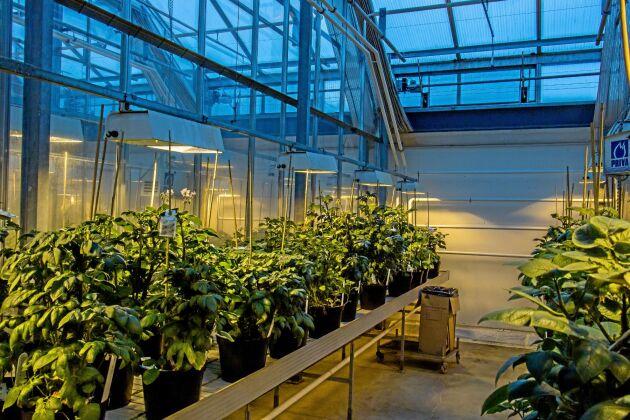 Ny genteknik gör det enklare för forskare att skapa nya grödor.