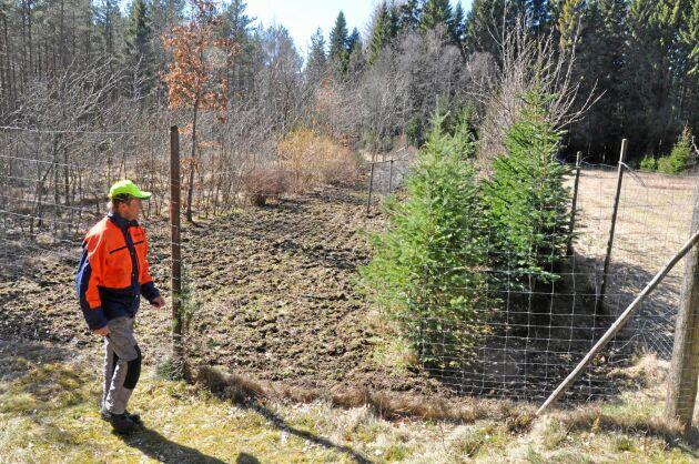 Lars Bertilsson har ett hägn där han drar upp plantor av träd som han själv är intresserad av.