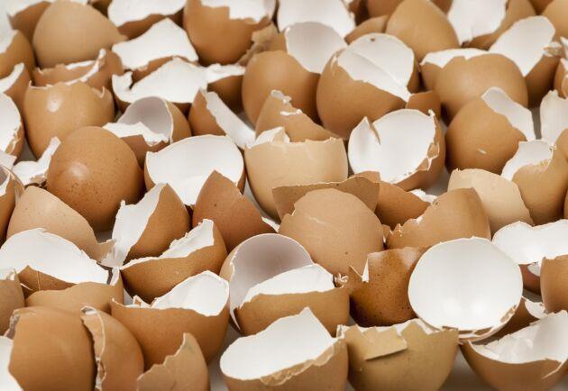 Belgiens jordbruksminister hävdar att nederländska myndigheter redan i november 2016 visste om de giftiga äggen - men sa inget till andra länder.
