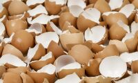 9,8 ton nederländska ägg i Finland