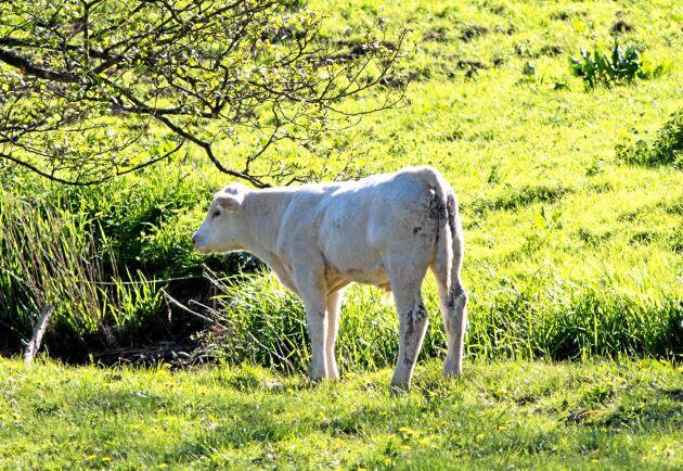 I ett nytt projekt ska markägare i Kristianstad få råd om hur värdefulla naturbetesmarker kan bevaras.