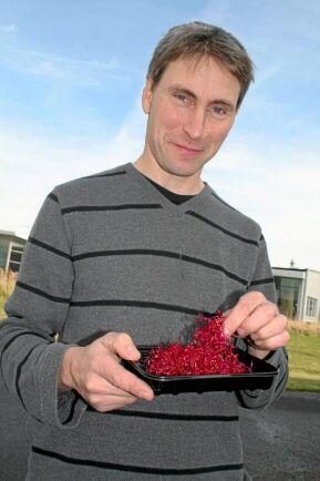 Rödbetsgroddar och nya krassesorter ska ta tillbaka marknad när efterfrågan på traditionella groddar och skott minskat. Jan-Eric Andersson hoppas kunna visa vinst nästa år efter förra årets ekonomiska smäll.