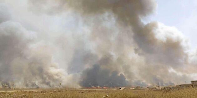 IS misstänks sätta eld på irakiska skördefält