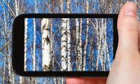 Skogsföretag vill bli mer digitala