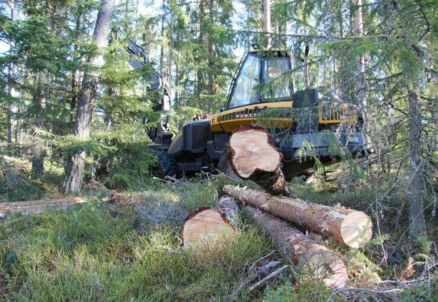 Finlands statsägda skog ska ha större inslag av hyggesfritt, är målet.